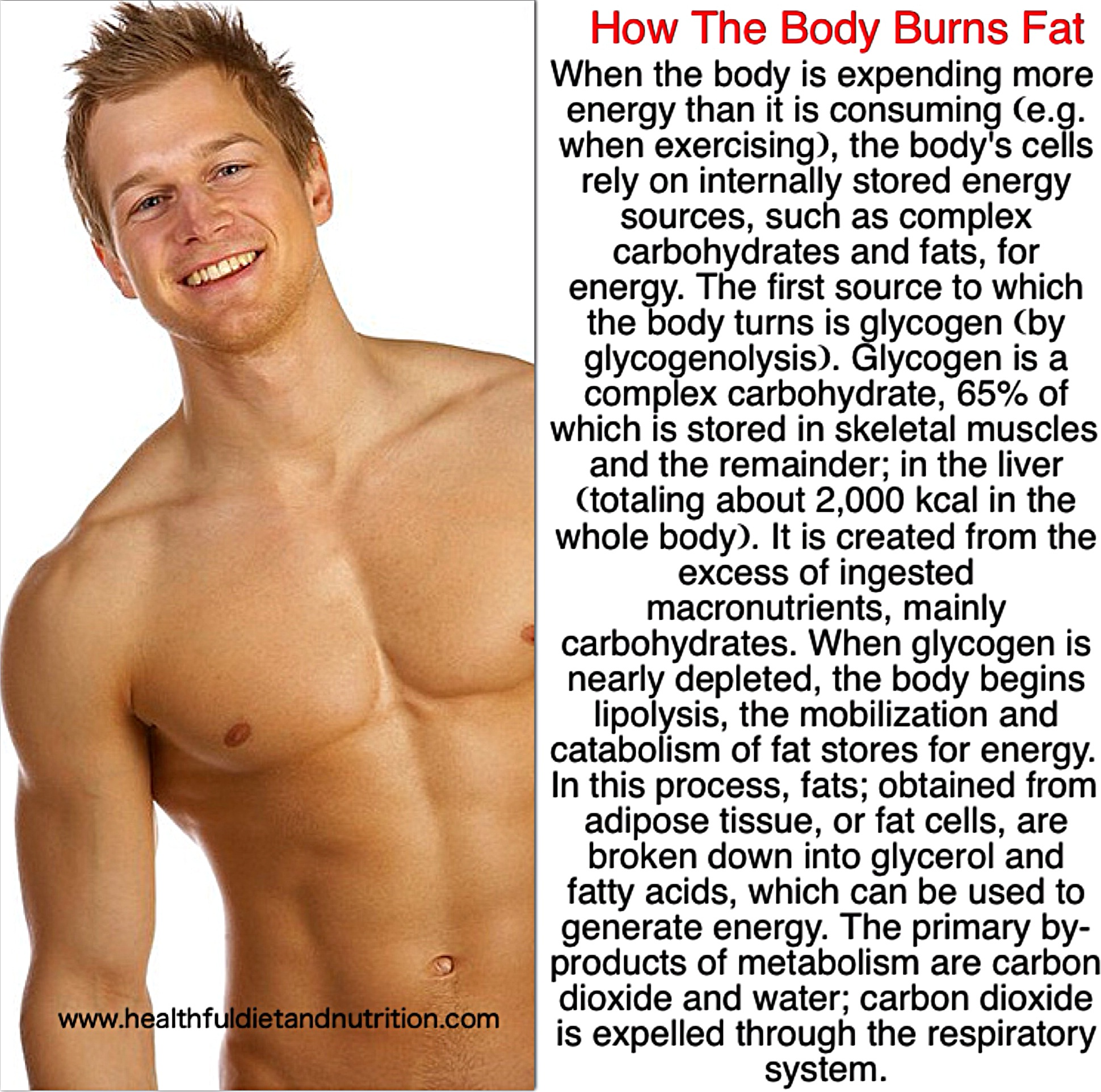 How the body burns fat
