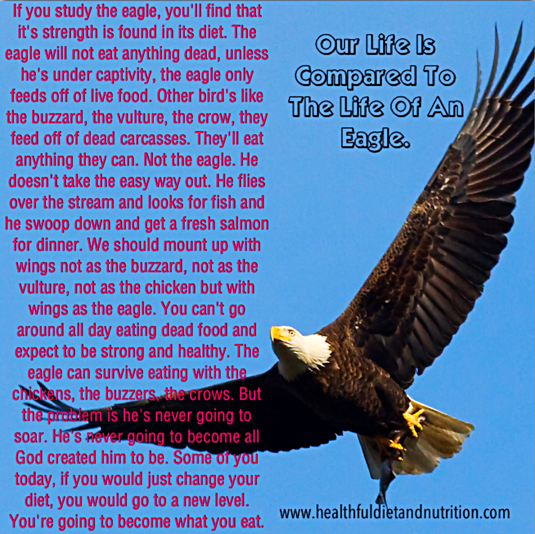 Our Life Is Compared To The Life Of An Eagle