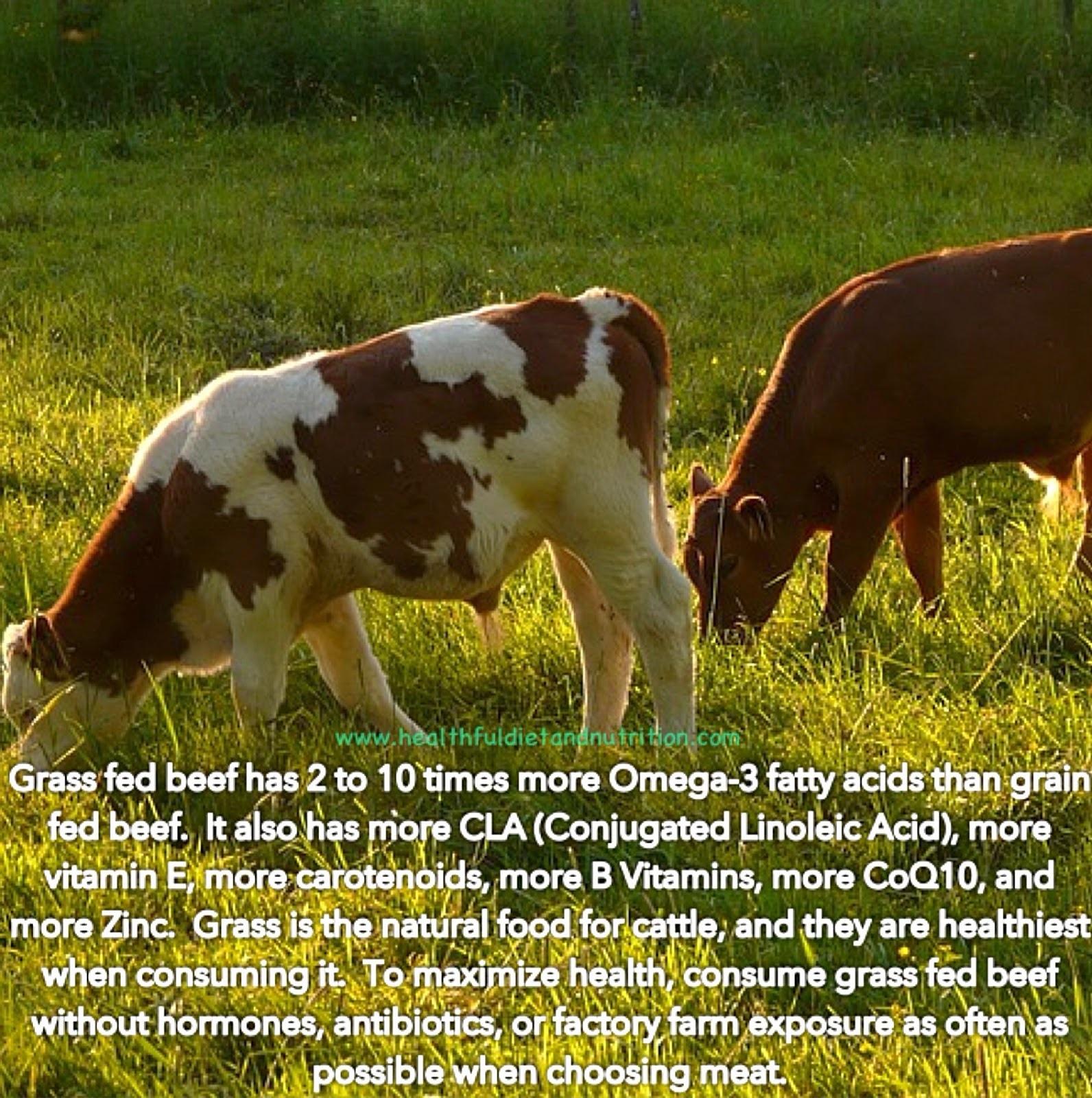 Consume Grass Fed Beef