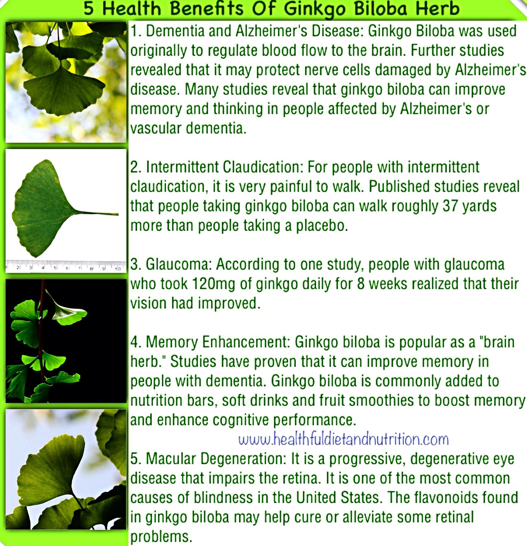 5 Health Benefits of Ginkgo Biloba Herb