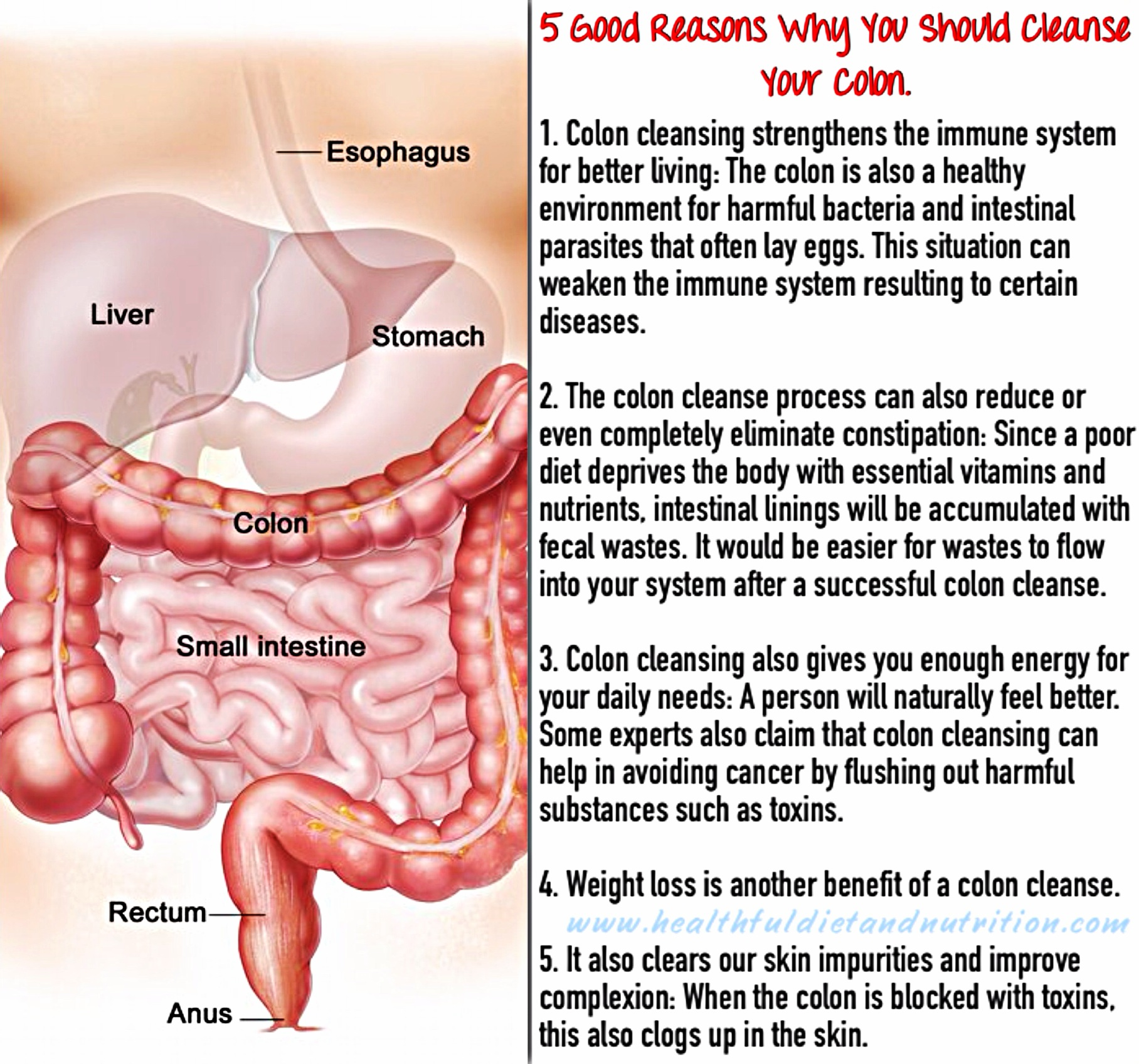 5 Good Why Should Cleanse Your Colon
