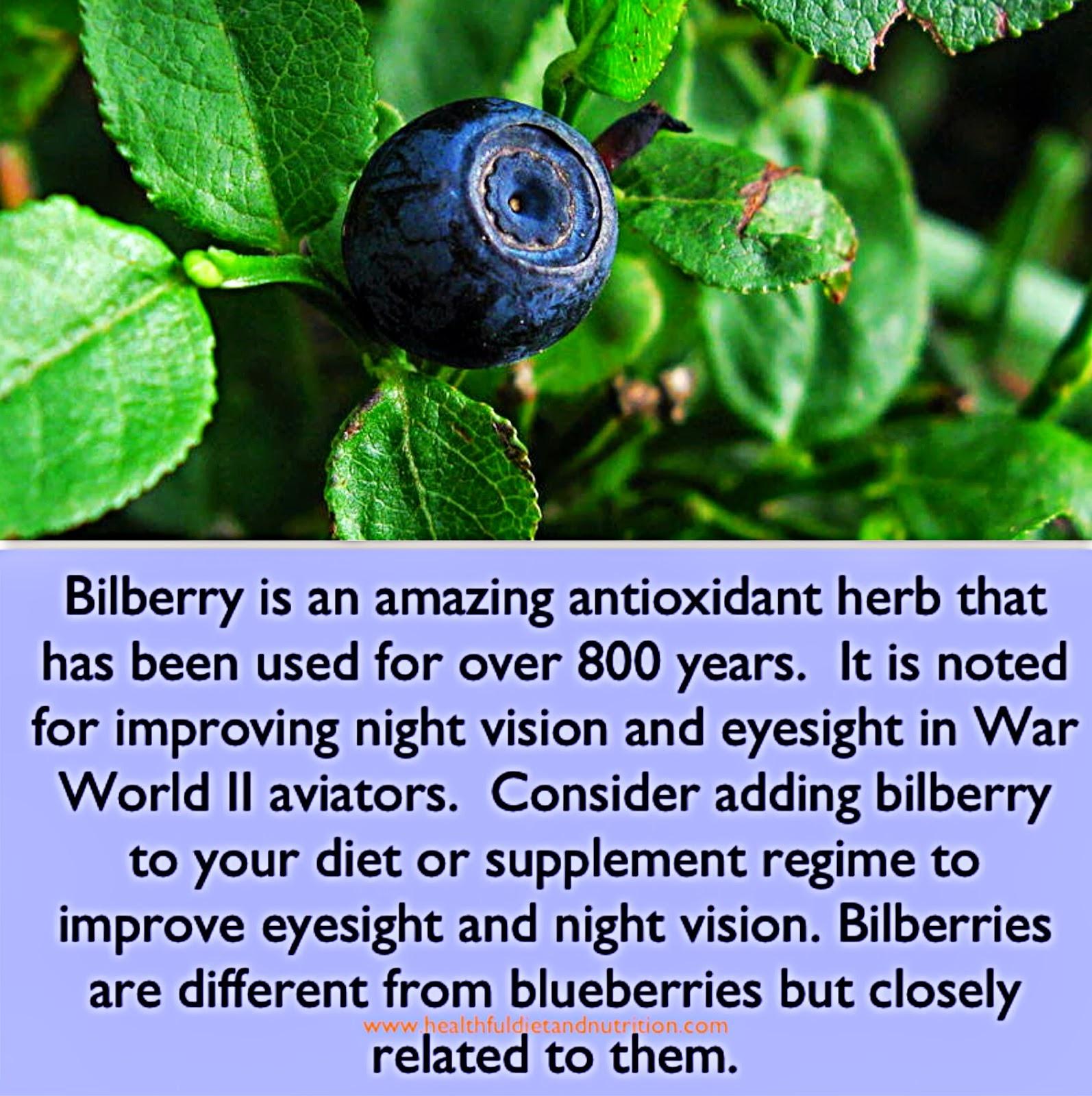 Bilberry Herb Benefits