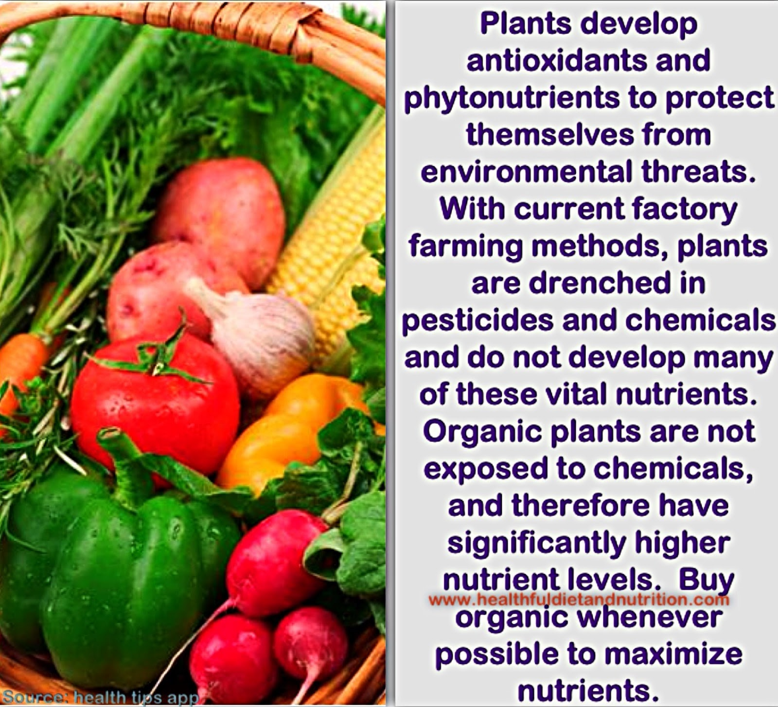 Consume Organic Foods To Maximize Nutrients